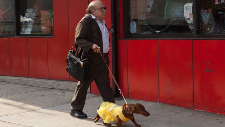 EXCLUSIVE: Todd Solondz Returns with 'Wiener-Dog'