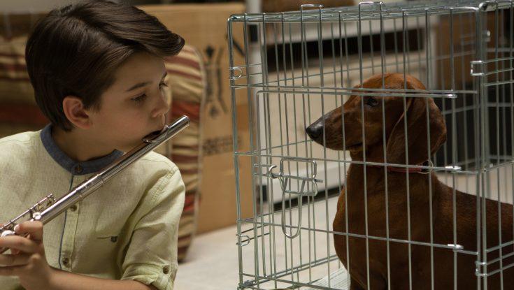 Photos: EXCLUSIVE: Todd Solondz Returns with 'Wiener-Dog'