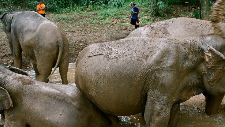 Photos: EXCLUSIVE: You Will Never Forget Ashley Bell's Elephant Documentary