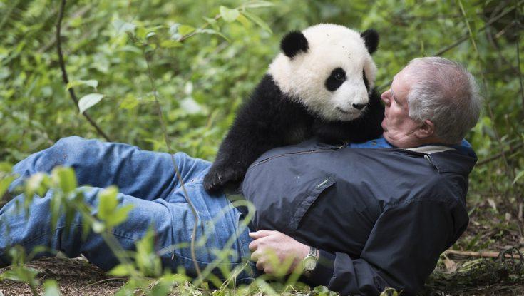 Photos: Noted Animal Documentarian Returns with 'Pandas'