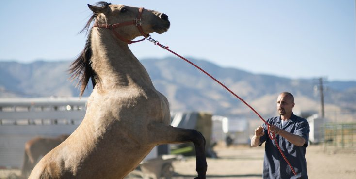 Photos: EXCLUSIVE: Matthias Schoenaerts is Home on the Range in 'Mustang'